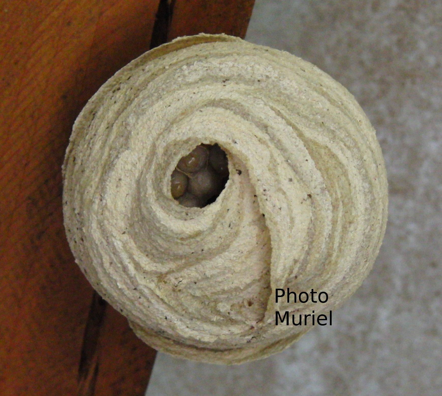 un nid de gu pes dans le cabanon bienvenue dans mes jardins. Black Bedroom Furniture Sets. Home Design Ideas